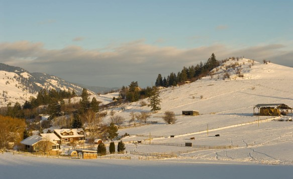 This is part of Coldstream, my rural community in the BC Okanagan. I took this photograph this afternoon while returning from a couple of hours of invigorating snow shoeing in -10C!