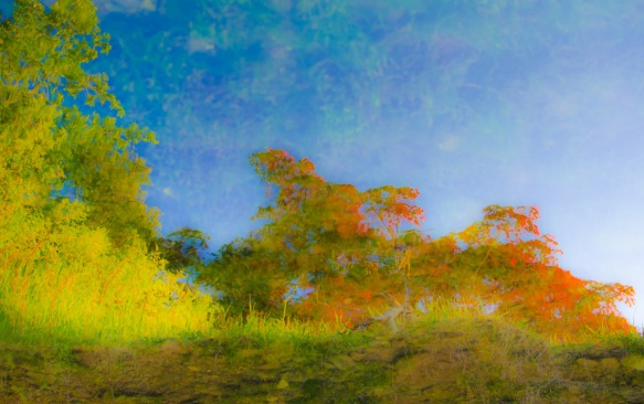 "Wild as this image may seem, it actually originated as a reflection in a creek. The ""sky"" is the creek bed viewed through flowing water. The image was flipped horizontally and the colour enhanced. Taken on location in Baya Exotica."
